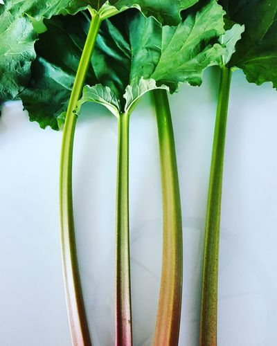 rhubarb From The Garden Green Color Farm Life Rhubarb Be My Guest EyeEm Selects Vegetable Close-up Green Color Plant Food And Drink Growing Plant Stem Stalk Leaf Vein Leaf Blooming Plant Life
