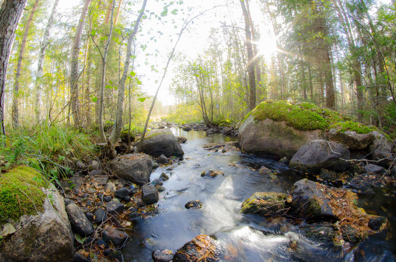 #Nature  #Flow #greencolour #landscape #rocks #shinyday #sunshine #trees #water
