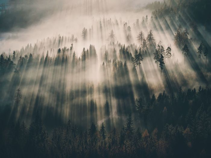 Nature Tranquility Beauty In Nature Scenics No People Tree Outdoors Idyllic Growth Forest Fog Tranquil Scene Day Water Sky Close-up Perspectives On Nature