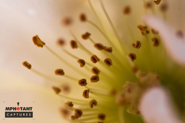 Backgrounds Beauty In Nature Close-up Communication Day Detail Extreme Close-up Flower Focus On Foreground Fragility Freshness Full Frame Growth Nature No People Outdoors Selective Focus Text Western Script Yellow