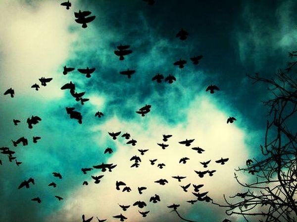 Lovely Birds Weather Cemalsureyya