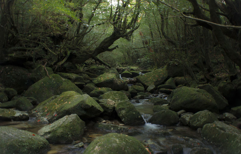 Yakushima Beauty In Nature Forest Jungle No People Outdoors Scenics - Nature Stream - Flowing Water Tree