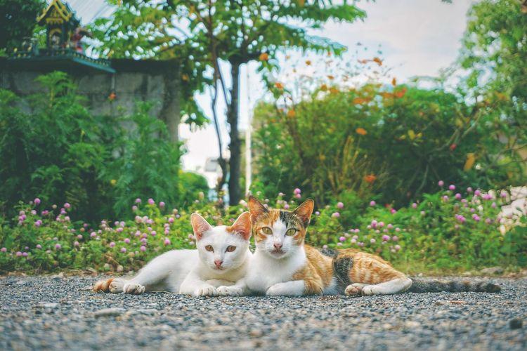 Portrait of cats on street