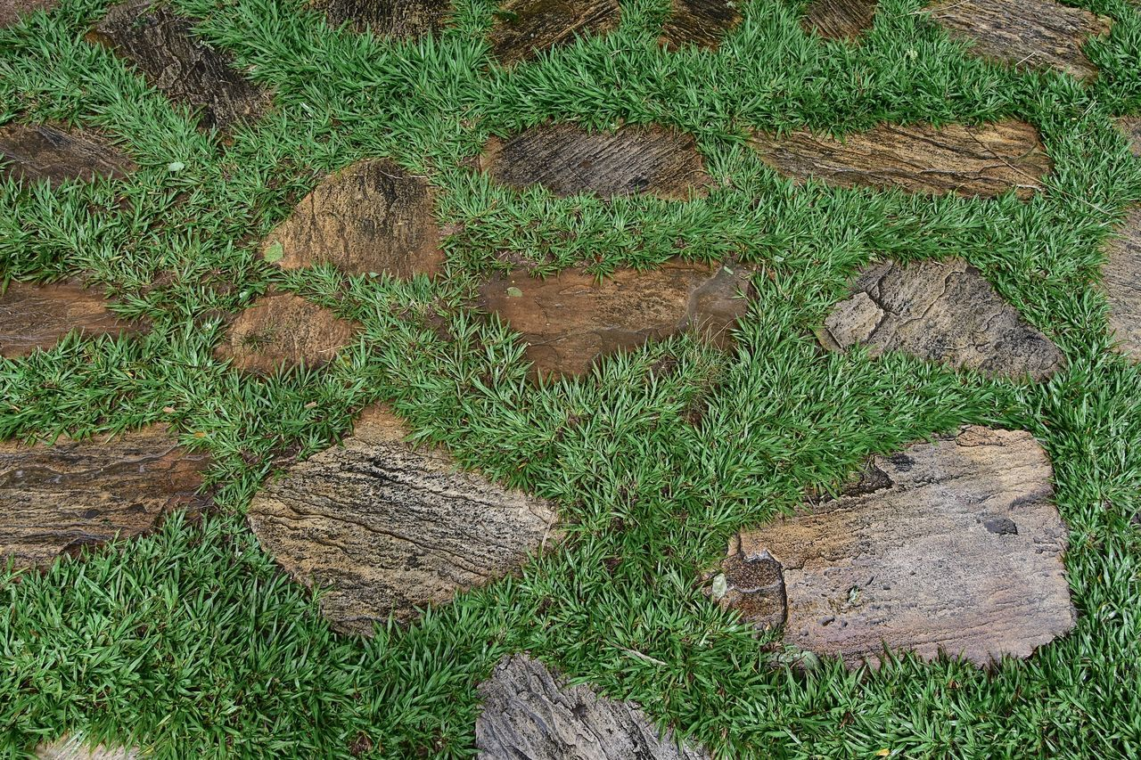 HIGH ANGLE VIEW OF STONE WALL ON FIELD