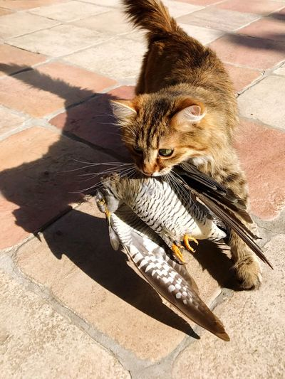 High Angle View Of Cat With Bird