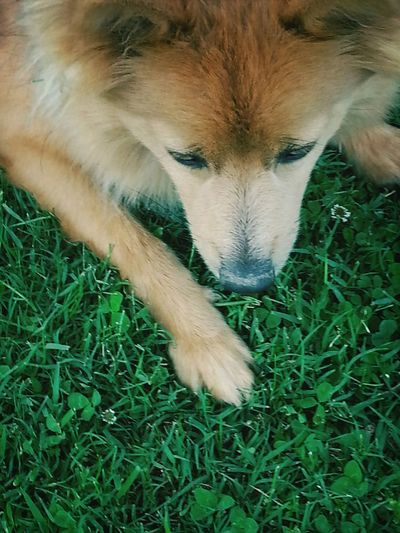 Dogoftheday Dog Shes Adorable DoggyLove
