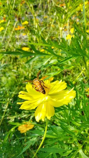 flower Flower One Animal Beauty In Nature Nature Yellow