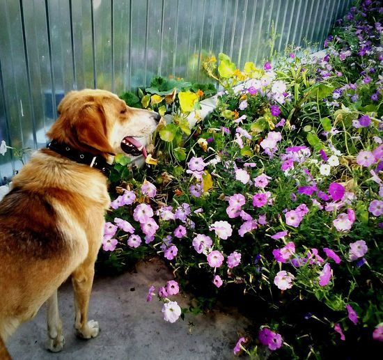 Pets Flower Dog Zoology Beauty In Nature One Animal Pets Flower Domestic Animals Dog Animal Themes One Animal Freshness Fragility Loyalty Mammal Pampered Pets Growth Springtime Selective Focus Vertebrate Zoology Beauty In Nature Blossom Brown