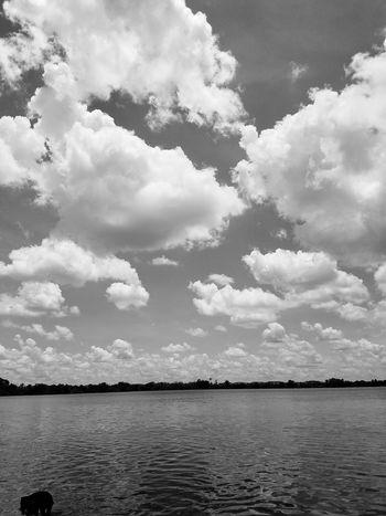 Black & White Water Sea Tree Bird Sky Cloud - Sky Cloudscape The Great Outdoors - 2018 EyeEm Awards