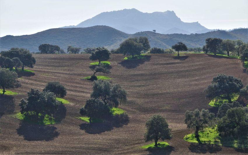 Oak Trees Agriculture España Field Landscape Mountainranges No People Rural Scene Sky Tranquil Scene Tree