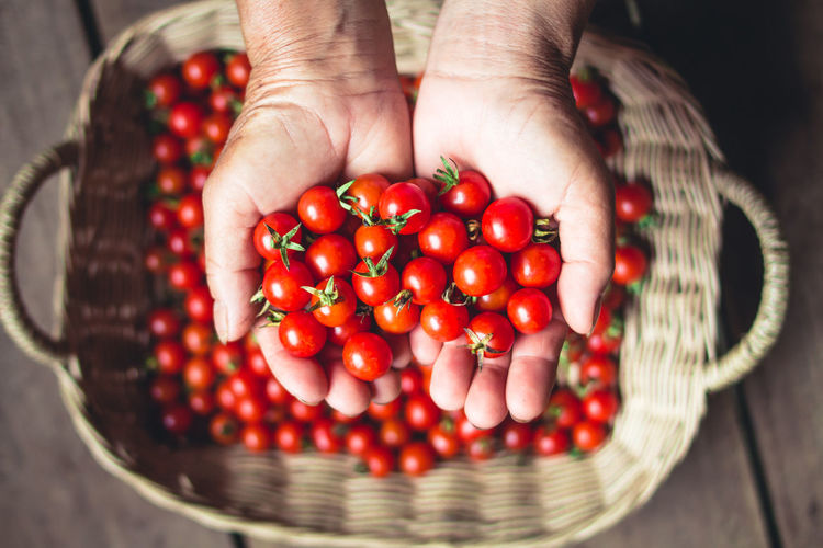 Tomato cherry in basket Tomato in hand South Asia Basket Body Part Close-up Container Finger Focus On Foreground Food Food And Drink Freshness Fruit Hand Healthy Eating High Angle View Holding Human Body Part Human Hand Large Group Of Objects One Person Real People Red Ripe Wellbeing