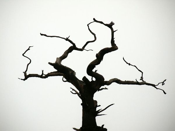 Dead Tree Tree Silhouette Black And White Greyskies Tree_collection
