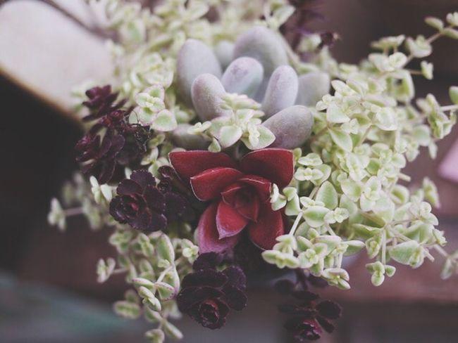Green Succulents Succulent Plant Fleshyplants Succulent Plants Miniture EyeEm Nature Lover