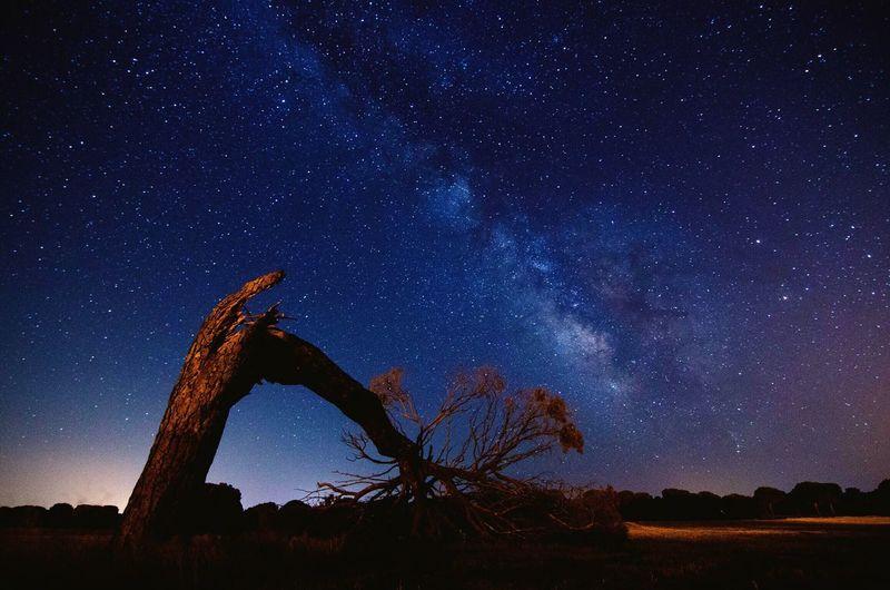 Fallen tree on field against sky with star field