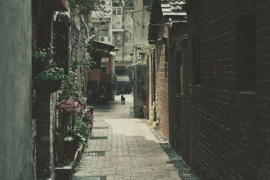 Old Town Old Street Alley Red Brick Wall Slow Life No People ...but 有小黑🐶 Taiwan Dog(^_^;)w Stray Dog 台灣犬❀小黑zzz… Animal Themes Taking Photos Snapshots Of Life From My Point Of View Light And Shadow Nostalgia Streetphotography Street Photography EyeEm Best Shots - The Streets Eye4photography  EyeEm Best Shots Home Is Where The Art Is VSCO 專)yuna's 鹿港記錄 at 鹿港老街 in 彰化 zhang hua , Taiwan