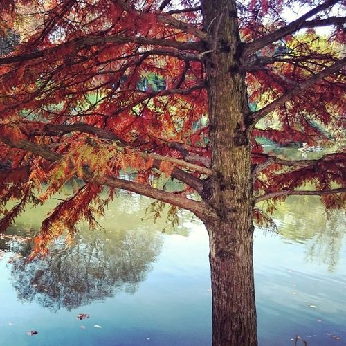 Dimanche automnal Enjoying The Sun Autumn Colors Autumn Nature Autumn Collection Sunday Fall Leaves Autumn Leaves
