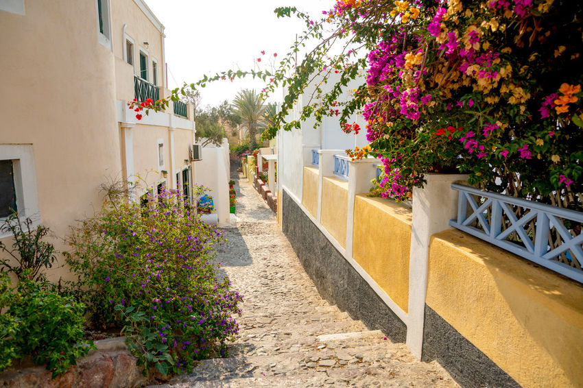 Greece Santorini Island Architecture Built Structure Plant Building Exterior Flower Flowering Plant Building Nature Day Growth House Footpath Outdoors Residential District Sunlight City No People Railing Staircase Tree Purple Flower Pot