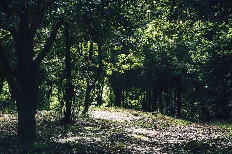 Forest Green Green Color Nature Trees Light And Shadow Wildlife Wild Wildlife & Nature Outdoors Outdoor Photography