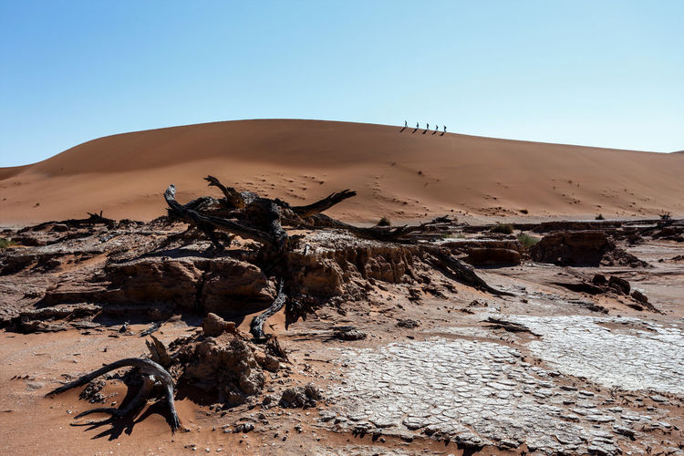 View of driftwood in desert