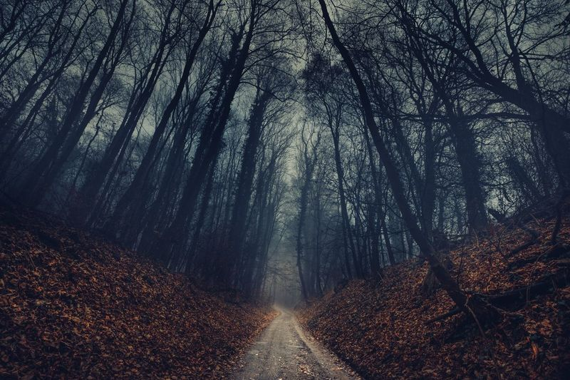Dark Path Darkness Trees Path Dark Forest Nature Tree The Way Forward Beauty In Nature Outdoors Tranquility WoodLand Autumn Landscape Tranquil Scene Scenics No People Fog Bare Tree Tree Area