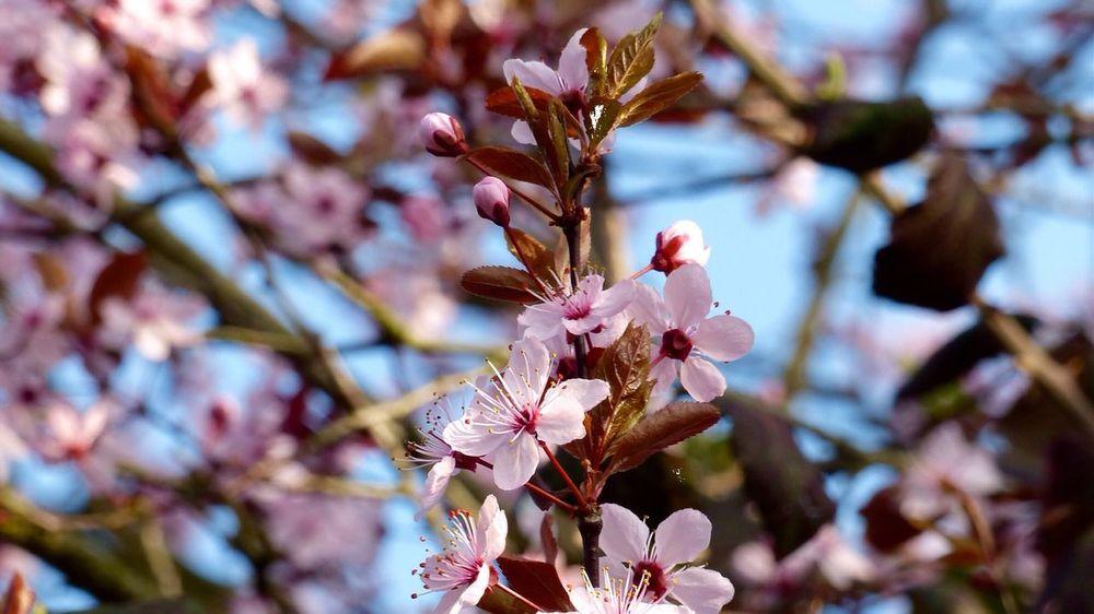 Dark Pink By Motorola Spring Flowers Pink Flower