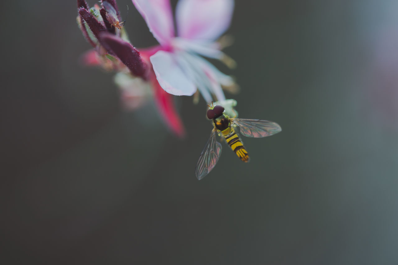 flower, insect, fragility, animals in the wild, beauty in nature, animal themes, nature, one animal, petal, growth, no people, close-up, animal wildlife, outdoors, day, plant, freshness, flower head, pollination