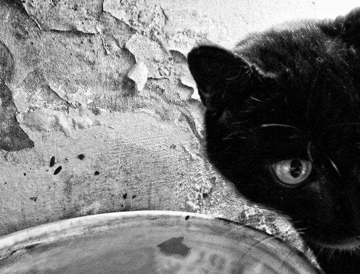 Cat siempre explorando