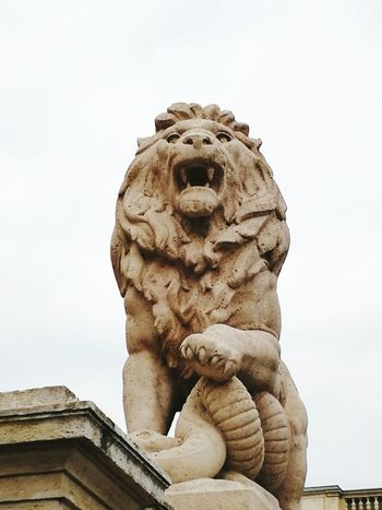 Budapest Hungary Capital Cities  Castle Art Architecture Detailphotography Art Architecture Detailphotography Details Enjoying Life Hanging Out Check This Out Made By Me Aurora Minna Statue Lion