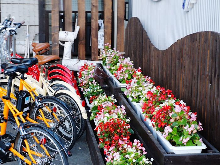 Brown Color Wood Wall White Flower Pink Flower Green Color Yellow Bicycles Red Bicycles Bicycles Red Color Red Flower EyeEm Selects Flower Close-up For Sale Colorful Various Variety Market