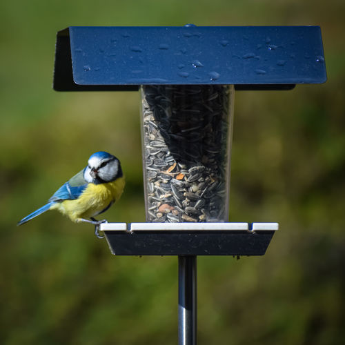 Close-up of bird perching on wooden pole