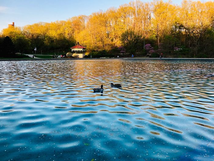 Water Sky Nature Plant Tree Rippled No People Day Beauty In Nature Waterfront Reflection Outdoors Tranquility Swimming Pool Sunset Architecture Pool Built Structure Lake