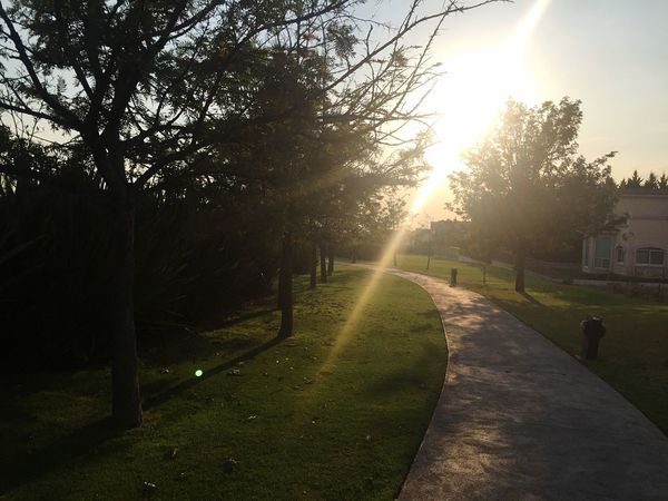 Sunlight Tree Lens Flare Road The Way Forward Sun Sunbeam Outdoors Nature No People Sky Growth Beauty In Nature Scenics Grass Day EyeEmNewHere