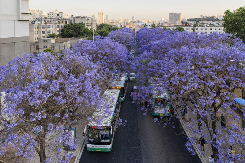 Purple flowering plants in city