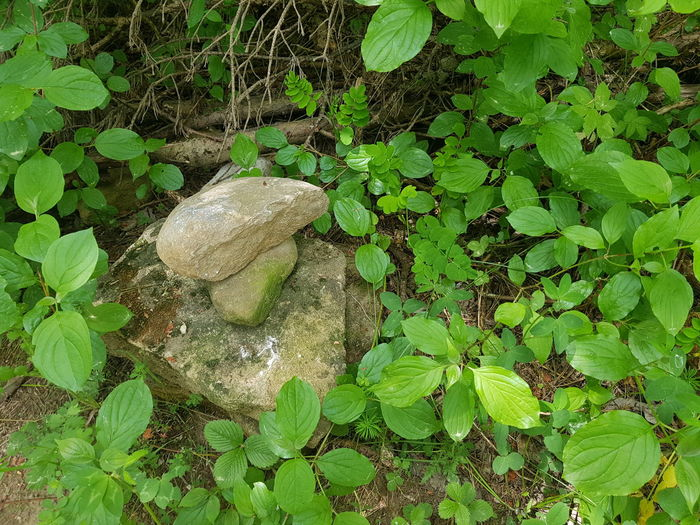High angle view of rocks on land