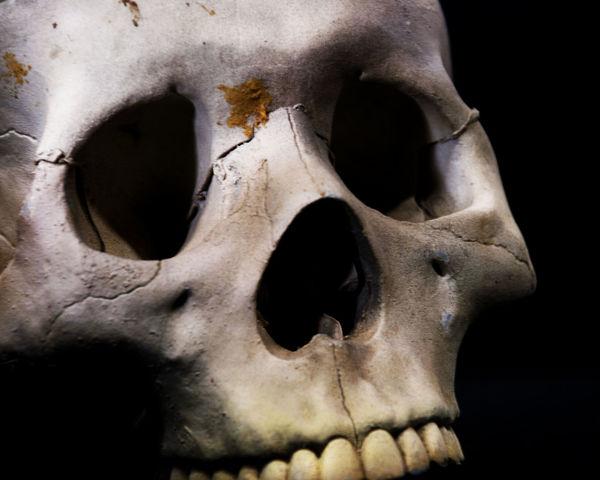Skully Black Background Black Color Close-up Creepy Dark Halloween Macabre Movie Props Old Part Of Props Scary Skeleton Skull Skulls Skulls And Bones Spooky