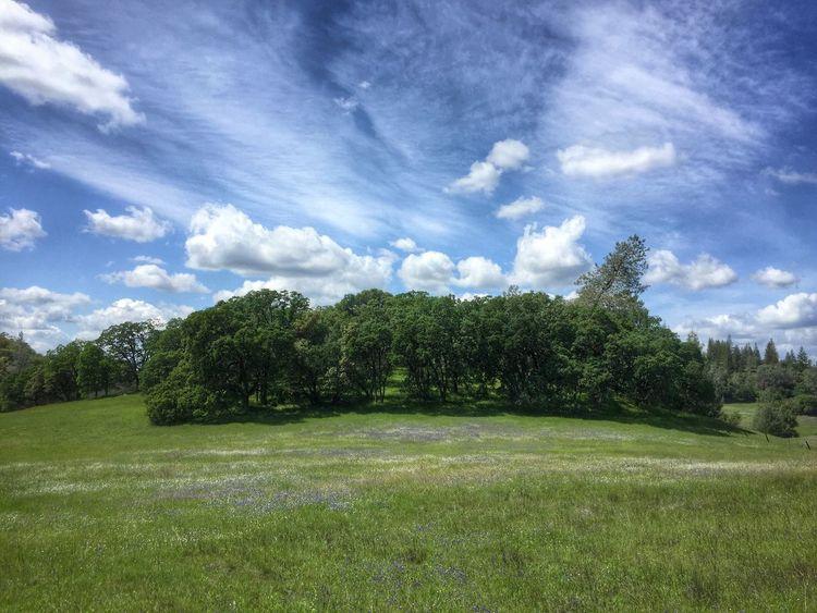 The meadow Landscape Landscape_Collection Landscape_photography Landscapes Meadow Trees Trees And Sky