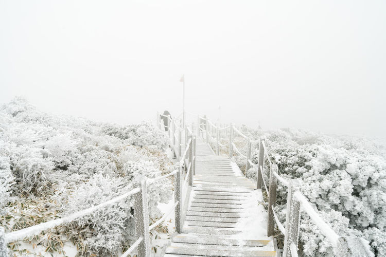 ASIA Halla Mountain Beauty In Nature Cold Temperature Day Fog Jejuisland Landscape Nature No People Outdoors Railing Road Rural Scene Scenics Sky Snow Snowing Straight The Way Forward Tire Track Tranquil Scene Tree Weather Winter