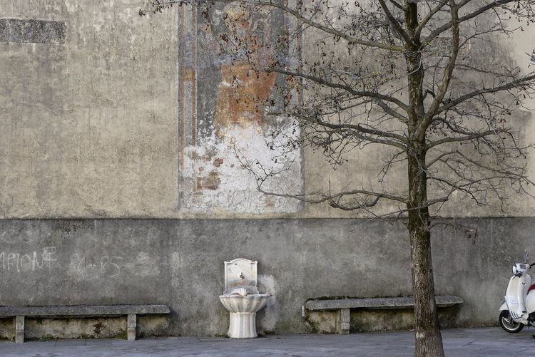 Painting Bare Tree Nature Bench Wall Fountain Wall Art Vespa Idyllic Outdoors Travel Tree Tree Trunk Springtime Still Life Architecture Built Structure Building Exterior My Best Photo The Art Of Street Photography