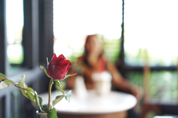 red rose in coffee shop. Focus On Foreground One Woman Only Only Women Outdoors Table Day Red Flower Close-up Nature Adult Defocused Beauty Adults Only Freshness Beauty In Nature People City One Person Sky