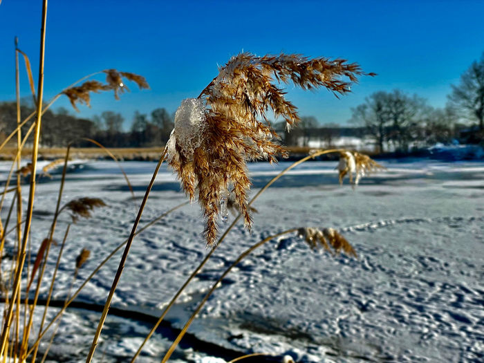 Close-up of frozen plants by sea against sky