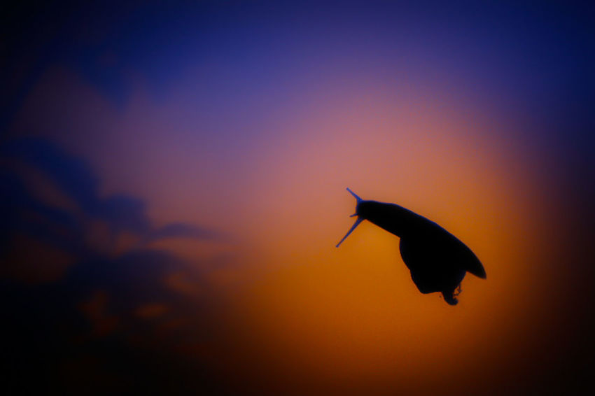 Snail. Colors Colours Plant Plants Snail Street Light Sunset Silhouettes Animal Themes Animals In The Wild Blue Color Colour Evening No People One Animal Orange Color Outdoors Purple Silhouette Sunset Vertebrate