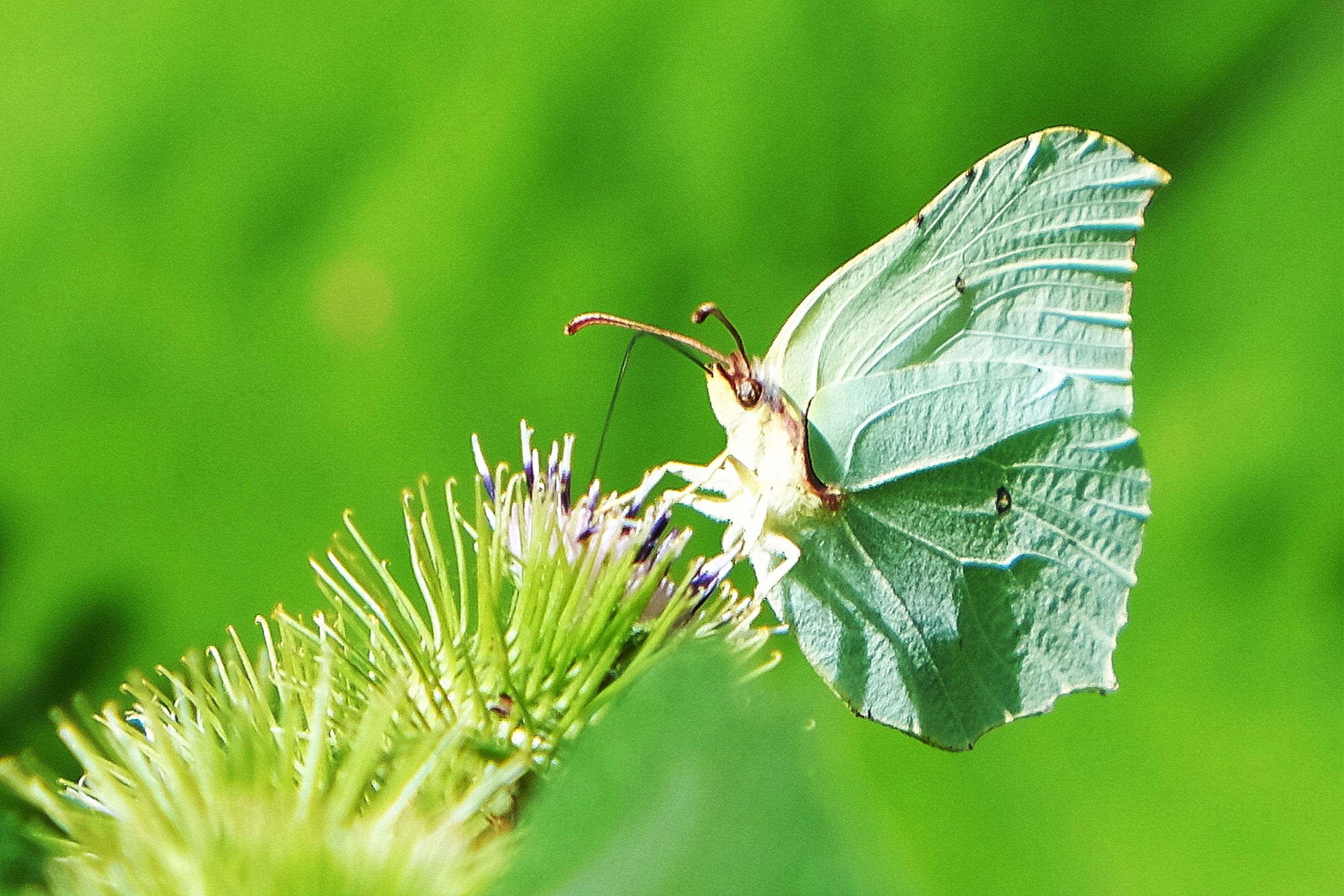 green color, leaf, plant part, plant, invertebrate, animal, one animal, animal themes, close-up, animal wildlife, animals in the wild, growth, insect, beauty in nature, nature, focus on foreground, no people, day, selective focus, vulnerability, animal wing, leaves, butterfly - insect