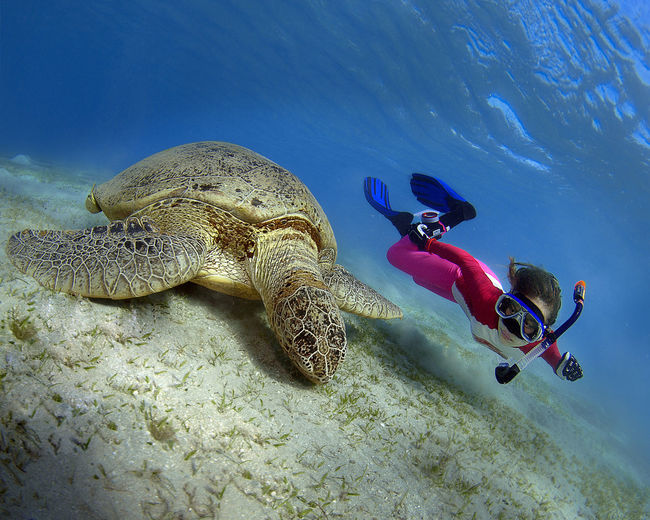 Freediver and the green turtle