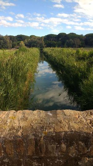 porto di traiano Tranquility Cloud - Sky Field Water Grass