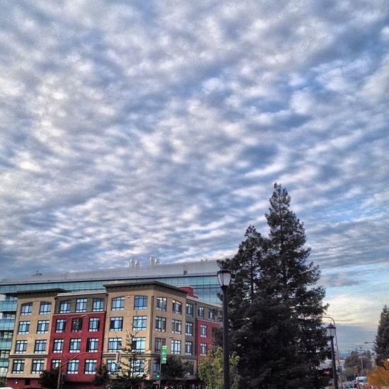 #sky, #clouds, #trees, #berkeley, #nofilter