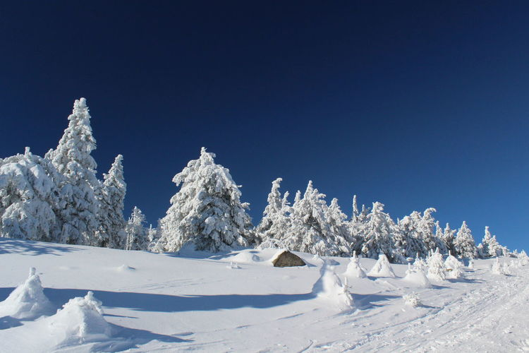 winter impressions of Nationalpark Harz Cold Temperature Snow Winter Nature Harz Brocken Trees Barks Of A Tree Sky Clear Sky Blue Tranquil Scene Scenics - Nature Beauty In Nature White Color Tranquility Copy Space No People Landscape Day Non-urban Scene Frozen Environment Snowcapped Mountain