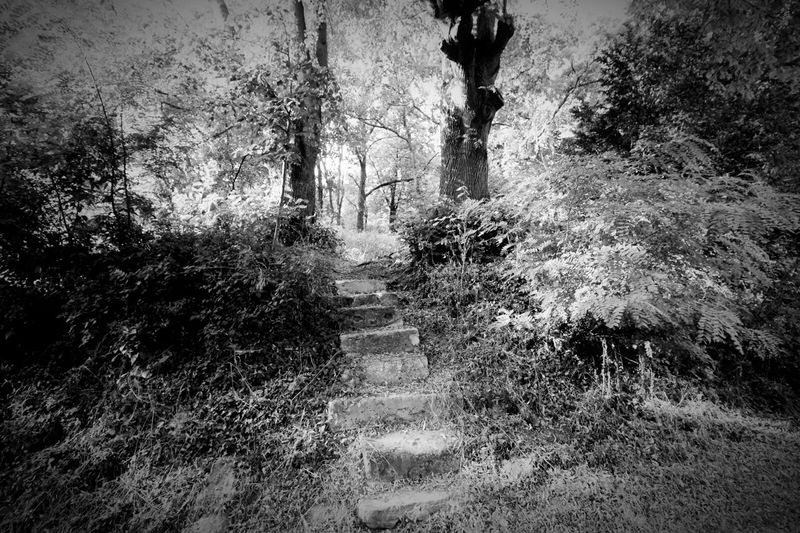 escalier Chemin Foret Arbre