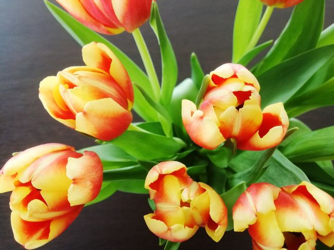 Tulips Bouquet Flower Freshness No People Petal Plant Growth Leaf Fragility Flower Head Indoors  Close-up Nature Beauty In Nature Day