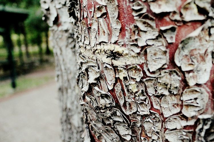 Wooden Texture Wood Texture Tree Tree Trunk Nature Forest Natural Light Photography Natural Life Kütahya Kutahyada Emet Termal Otel Emet Emet Bor First Eyeem Photo
