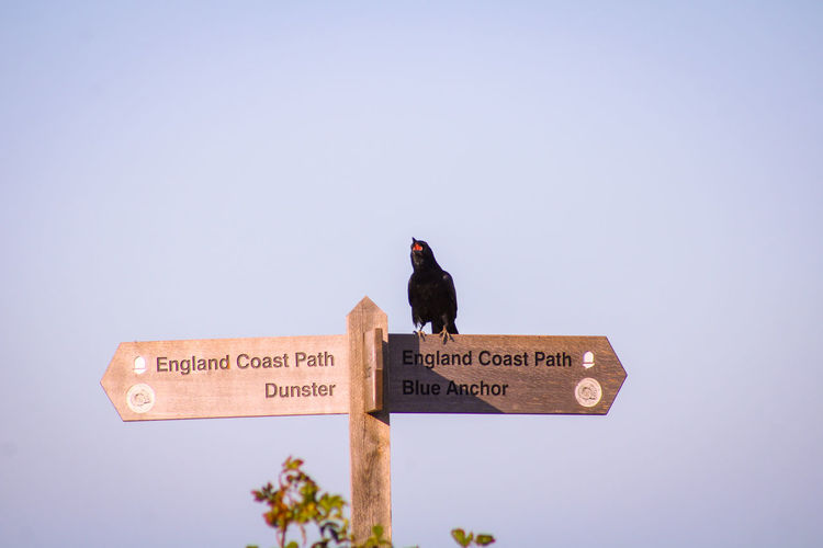 Low angle view of bird perching on a sign